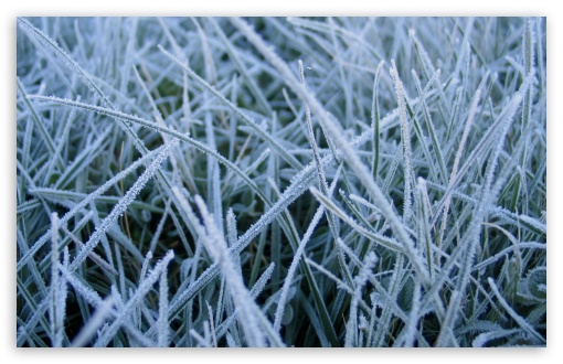 frosted_grass_2-t2.jpg